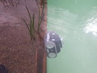 pielęgnacja stawu kąpielowego